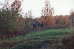 Nyskjerrig-elg